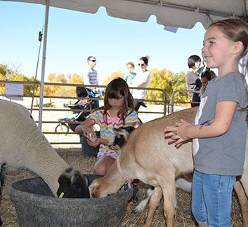 Fall Fest_PettingFarm