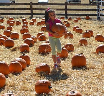 Fall Fest_Pumpkins