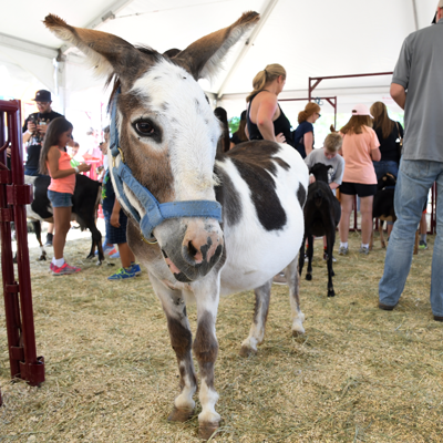 pic_open_spaces_fair_donkey