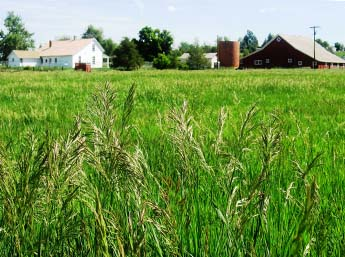 This image shows the 17 Mile House in the background and wild grasses in the foreground.
