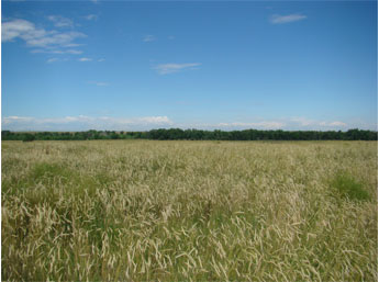 This image is a panoramic view of Kiowa Creek North Open Space.